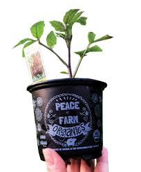peace-farm