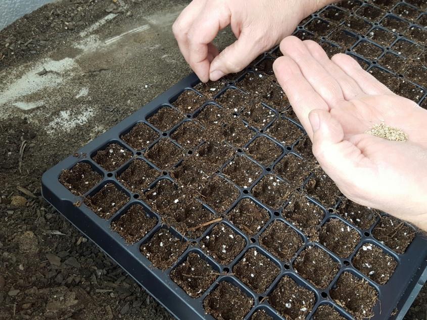 planting peppers.jpg